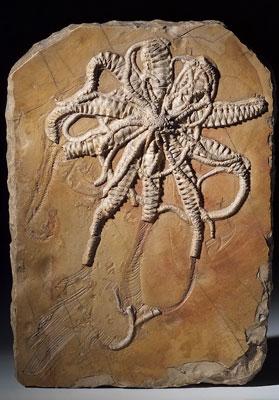 Fossiles de Cerin - Livres Photos Nature et Animaux